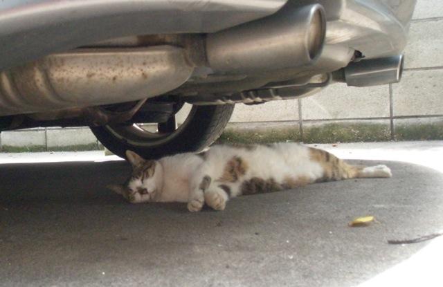 夏猫2.jpg