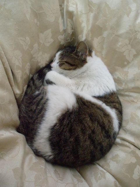 イースター猫卵1.jpg