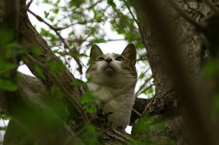 木登り5.jpg